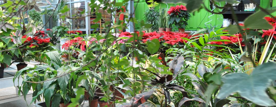 piante_fiori_01