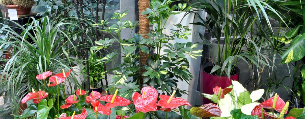 piante_fiori_03